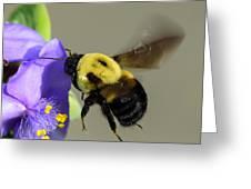 Bee Landing On Spiderwort Flower Greeting Card
