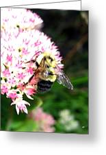 Bee-line 2 Greeting Card
