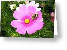Bee-line 6 Greeting Card