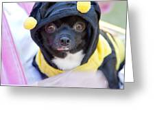 Chihuahua Says Bee Mine Greeting Card