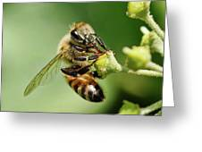 Bee On A Flower Closeup Greeting Card