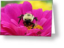 Bee On A Hot Pink Zinnia Greeting Card