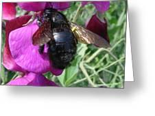 Bee On A Sweetpea 2 Greeting Card