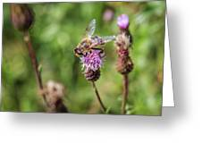 Bee On A Thistle Flower Greeting Card