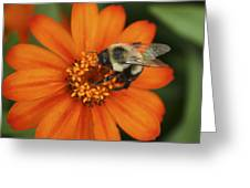 Bee On Aster Greeting Card