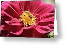 Bee On Beautiful Dahlia Greeting Card
