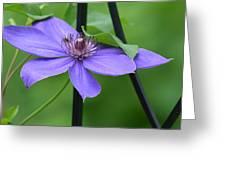 Bee On Bloom Greeting Card