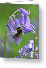 Bee On Bluebell Greeting Card