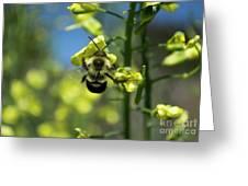 Bee On Broccoli Flower Greeting Card
