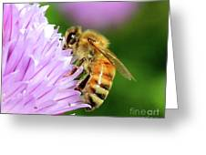 Bee On Chive Flower Greeting Card by Ann E Robson