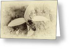 Bee On Citrus Flower Greeting Card
