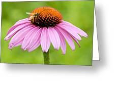 Bee On Cone Flower Greeting Card
