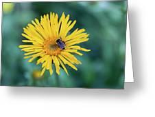 Bee On Curlyhead Goldenweed Greeting Card