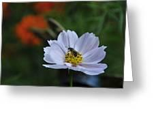 Bee On Daisy Greeting Card