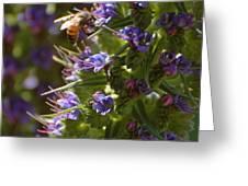 Bee On Echium Greeting Card