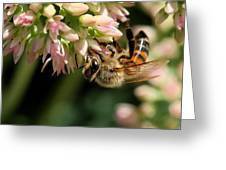 Bee On Flower 1 Greeting Card