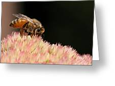 Bee On Flower 2 Greeting Card