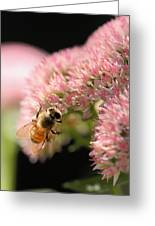 Bee On Flower 3 Greeting Card