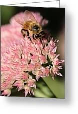 Bee On Flower 4 Greeting Card
