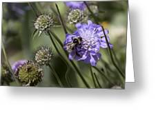 Bee On Flower 4. Greeting Card