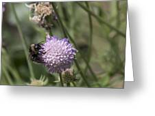 Bee On Flower 5. Greeting Card