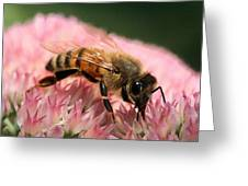 Bee On Flower 6 Greeting Card