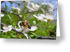 Bee On Flower On Tree Branch Greeting Card
