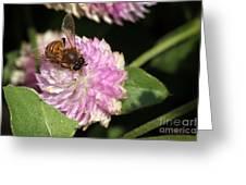 Bee On Gomphrena Greeting Card