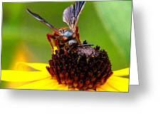 Bee On Lazy Susan 3 Greeting Card