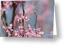 Bee On Pink Bloom Greeting Card