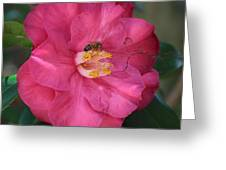 Bee On Pink Camellia Greeting Card