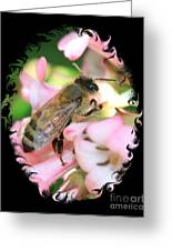 Bee On Pink Flower With Swirly Framing Greeting Card