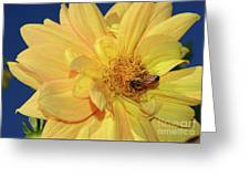 Bee On Pretty Dahlia By Kaye Menner Greeting Card