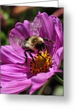Bee On Purple Flower Greeting Card