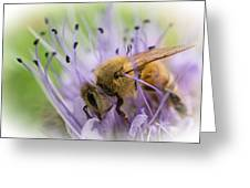 Bee On Purple Greeting Card