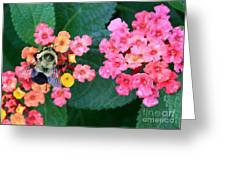 Bee On Rainy Flowers Greeting Card