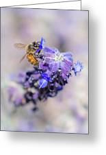 Bee On Sage Greeting Card