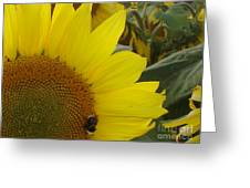 Bee On Sunflower 1 Greeting Card
