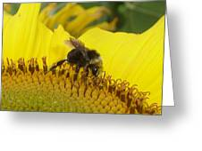 Bee On Sunflower 2 Greeting Card