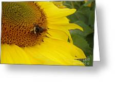 Bee On Sunflower 3 Greeting Card