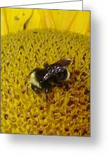 Bee On Sunflower 4 Greeting Card