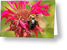 Bee On Tea Bloom Greeting Card