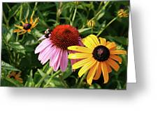 Bee On The Cone Flower Greeting Card