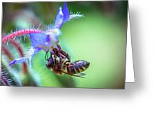 Bee On The Flower Greeting Card