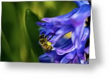 Bee On The Hyacinth Greeting Card