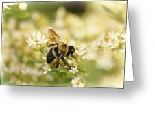 Bee On Top Of Things Greeting Card