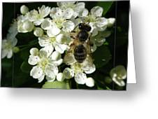 Bee On White Flowers 2 Greeting Card