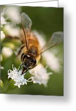 Bee On White Vertical Greeting Card