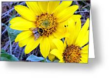 Bee On Wild Sunflowers Greeting Card