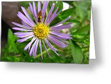 Bee On Wildflower Greeting Card